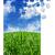 синий · зеленая · трава · головоломки · небе · трава · лист - Сток-фото © SSilver