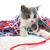 kat · spelen · garen · driekleur · vrouwelijke · kitten - stockfoto © ssilver