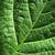 水面 · 緑色の葉 · 新しい · 生まれる · 詳細 · 水 - ストックフォト © ssilver
