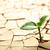 завода · сушат · треснувший · грязи · лист · пустыне - Сток-фото © ssilver