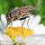 フライ · マクロ · 写真 · 花 · 自然 · 葉 - ストックフォト © Steevy84