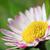 camomila · cair · folha · fundo · beleza · verão - foto stock © steevy84