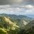 vulcânico · ilha · tenerife · pinho · floresta - foto stock © steffus