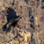 black raven fly in mountains stock photo © steffus