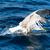 gaviota · aves · despegue · vuelo · agua - foto stock © steffus