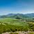 дороги · Средиземное · море · пейзаж · асфальт · типичный · соснового - Сток-фото © steffus
