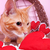 Valentine Cat stock photo © Stephanie_Zieber