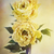 yellow peonies stock photo © stephaniefrey
