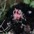 galinha · olhando · câmera · em · pé · verde · gramado - foto stock © stephaniefrey