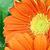 makro · turuncu · papatya · soyut · yaprakları - stok fotoğraf © stephaniefrey