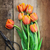 antique scissors and bouguet of tulips stock photo © stephaniefrey