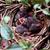 baby birds in a nest stock photo © stephaniefrey