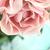аннотация · романтические · розовый · роз · цветы · капли · воды - Сток-фото © stephaniefrey