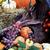 осень · украшения · тыква · индийской · кукурузы · красочный - Сток-фото © stephaniefrey
