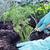 bodem · keuken · vruchten · plantaardige · vuilnis - stockfoto © stephaniefrey