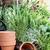 ervas · manjericão · alecrim · mesa · de · madeira · raso · comida - foto stock © stephaniefrey