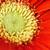 デイジーチェーン · マクロ · 滴 · 黄色 · 水滴 · 花弁 - ストックフォト © stephaniefrey