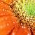 macro · flor · reflexão · vermelho - foto stock © stephaniefrey