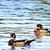 fa · kacsa · tó · háttér · szépség · madár - stock fotó © stephaniefrey