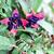 makró · fotó · virágok · közelkép · lila · virág - stock fotó © stephaniefrey
