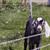 nubian goat kid stock photo © stephaniefrey