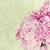 branco · flor · natureza · jardim - foto stock © stephaniefrey