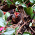 baby sparrow in a nest stock photo © stephaniefrey