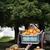 carvalho · cair · árvore · folha · árvores · verão - foto stock © stephaniefrey