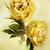kettő · narancs · rózsa · virágok · természet - stock fotó © stephaniefrey
