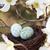 vogels · nest · twee · eieren · geïsoleerd · witte - stockfoto © stephaniefrey