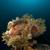 fenséges · Vörös-tenger · víz · hal · természet · tájkép - stock fotó © stephankerkhofs