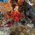 piros · szivacs · trópusi · Vörös-tenger · hal · tájkép - stock fotó © stephankerkhofs