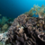 elefante · orecchio · corallo · mar · rosso · pesce · natura - foto d'archivio © stephankerkhofs