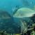 császár · Vörös-tenger · víz · hal · kék · élet - stock fotó © stephankerkhofs