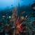 búvár · trópusi · Vörös-tenger · hal · tájkép · tenger - stock fotó © stephankerkhofs