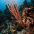 piros · gyülekezet · ostor · trópusi · Vörös-tenger · hal - stock fotó © stephankerkhofs