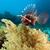 vízalatti · díszlet · Vörös-tenger · hal · természet · tájkép - stock fotó © stephankerkhofs