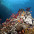 trópusi · Vörös-tenger · hal · természet · tájkép · tenger - stock fotó © stephankerkhofs