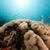 bolla · corallo · mar · rosso · acqua · pesce · natura - foto d'archivio © stephankerkhofs