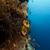 fenséges · trópusi · Vörös-tenger · hal · tájkép · tenger - stock fotó © stephankerkhofs