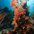 рыбы · тропические · пейзаж · морем · фон - Сток-фото © stephankerkhofs