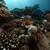 trópusi · hal · természet · tájkép · háttér · óceán - stock fotó © stephankerkhofs