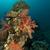 tropische · onderwater · landschap · rode · zee · water · vis - stockfoto © stephankerkhofs