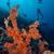 trópusi · Vörös-tenger · hal · természet · tájkép · háttér - stock fotó © stephankerkhofs