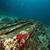 carga · mar · vermelho · peixe · natureza · paisagem · oceano - foto stock © stephankerkhofs