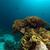 elefánt · fül · korall · Vörös-tenger · hal · természet - stock fotó © stephankerkhofs