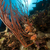 красный · кнут · рыбы · природы - Сток-фото © stephankerkhofs