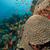 hal · trópusi · Vörös-tenger · tájkép · tenger · háttér - stock fotó © stephankerkhofs