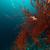 preto · coral · mar · vermelho · água · peixe · natureza - foto stock © stephankerkhofs