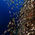 воды · рыбы · природы · пейзаж - Сток-фото © stephankerkhofs